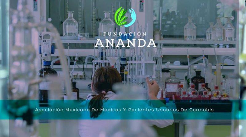 Este fin de semana aprende sobre cannabis medicinal y recreativo en Fundación Ananda